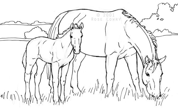 Mare Foal Jpg 684 418 Horse Coloring Pages Horse Drawings Horse Coloring