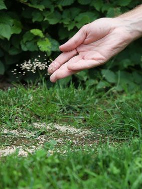 Kale plekken in het gazon kunt u herstellen. Doe dit door doorzaaien! Stap 2 van het #ECOstyle #7Stappenplan