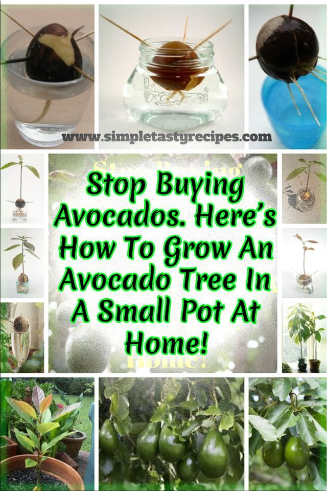 Stop Ing Avocados Here S How You Can Grow An Avocado