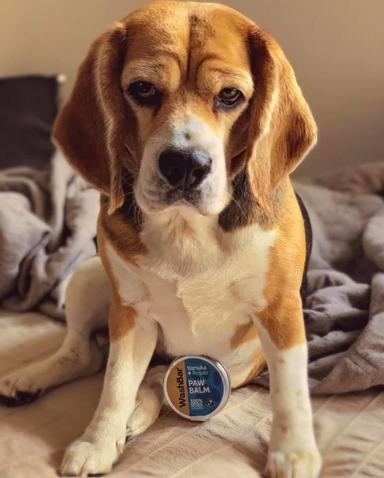Buy New Zealand Made On Linkedin Dogs Worldwide Rely On New