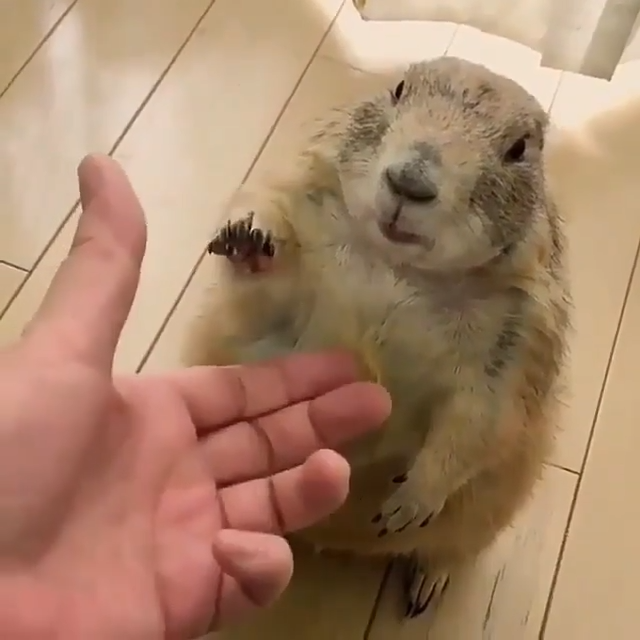I'm not sure what kind of rodent this is, but he's hella cute!
