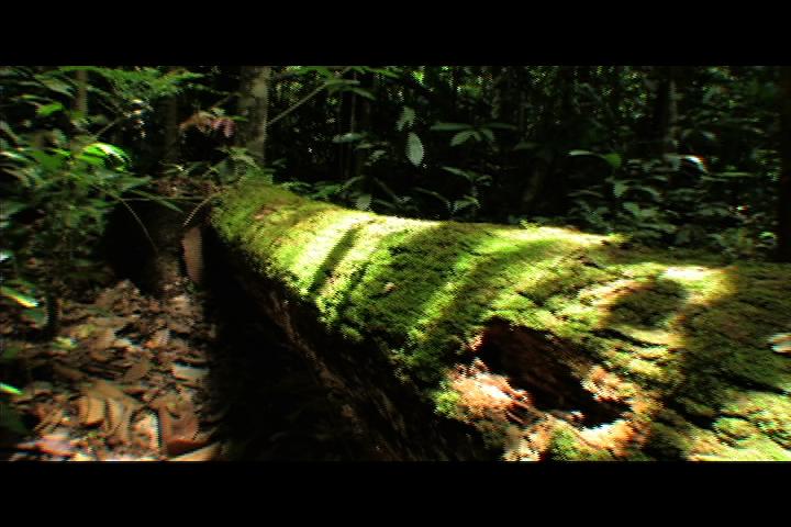 Jungle B Roll Plants Png Environmental Film Festival Film Free Films