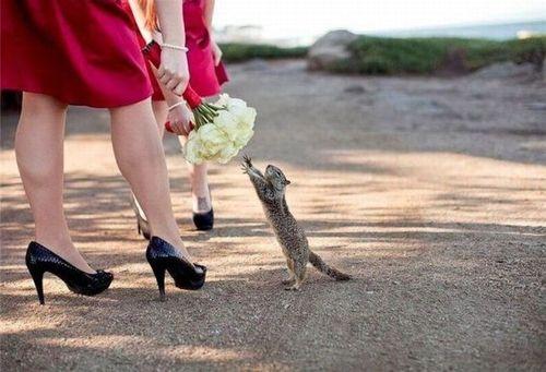 """""""MINE! My bouquet!""""  snowbunniez:    Cute squirrel wants to get married"""