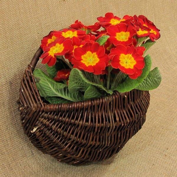 Wiklina (Wicker) - Cebulak mały z kwiatami