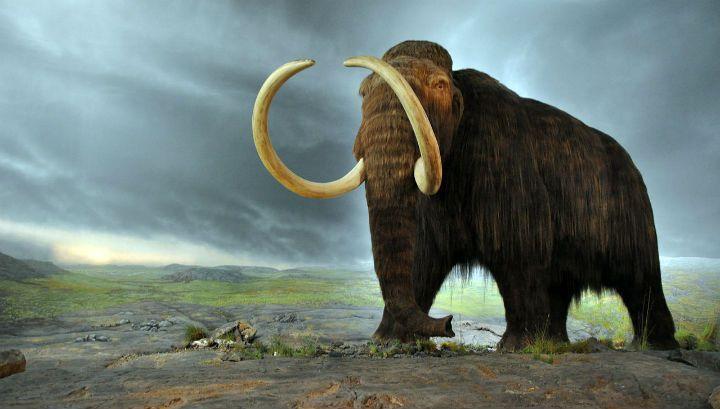 На раскопках в Пермском крае нашли прародителя мамонта