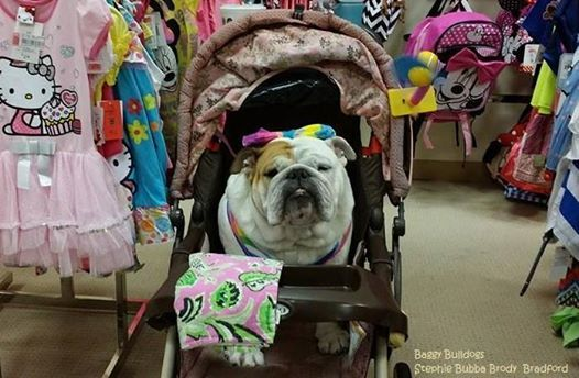 Somebody hates shopping but likes being wheeled around lol