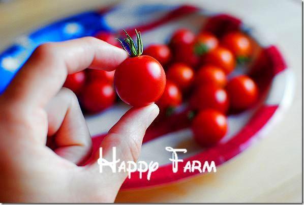 Visit To Buy 100 Pieces Rare Climbing Tomato Seeds 400 x 300