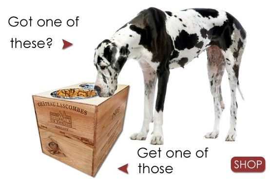 Elevated Dog Feeders Raised Dog Bowls Real Estate Postcards