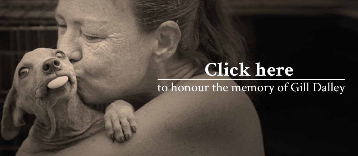 In memory of Gill: your help needed | Memories, Film ...