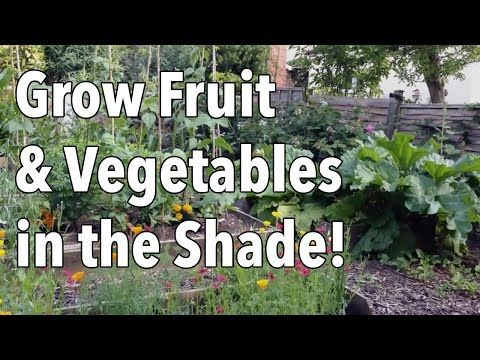 grow shade loving vegetables and fruits organic gardening mother earth news