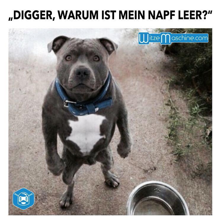 """Lustiger Hund - """"Digger, warum ist mein Napf leer?"""" - witzemaschine #funnydogs"""