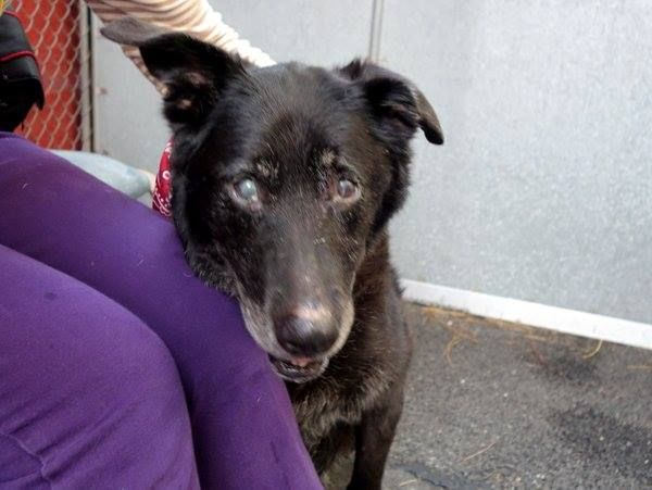 Pin By Samantha Jones On Senior Paws Need Adopt Rescue Too No