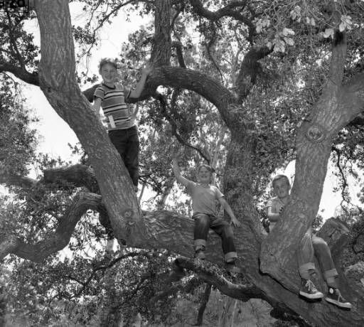 Boys In Ancient Live Oak Tree At Long Beach Builder S Exchange Picnic Irvine Regional Park June 16 1951 Live Oak Trees Tree Live Oak