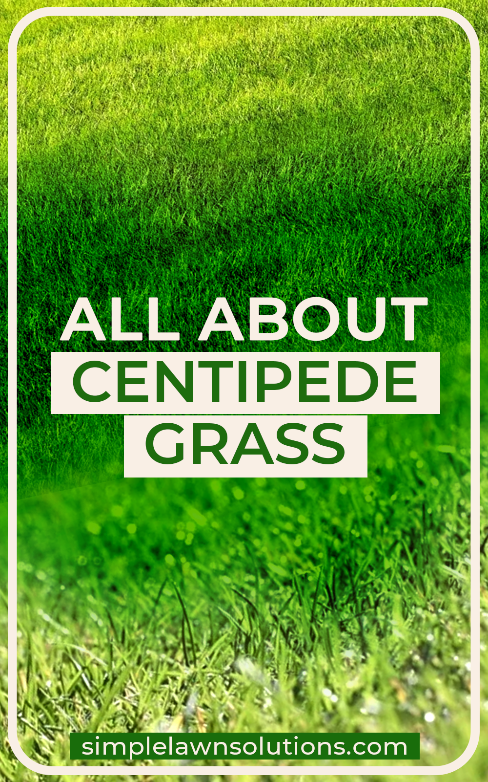 All About Centipede Grass In 2020 Centipede Grass Lawn Grass Types Warm Season Grass