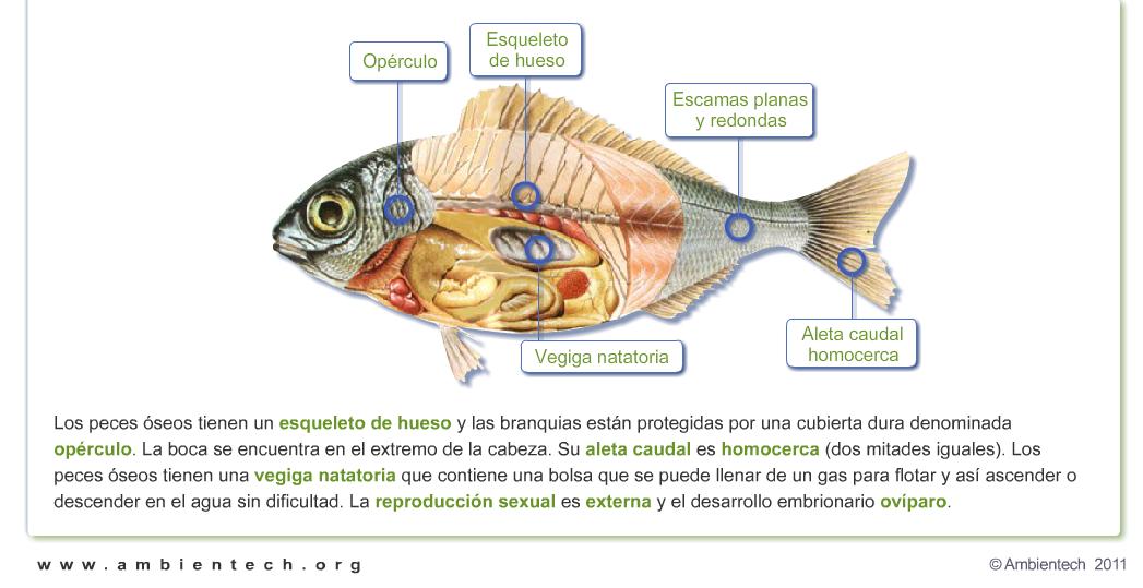 Características de los peces. http://www.ambientech.org/spa/category ...