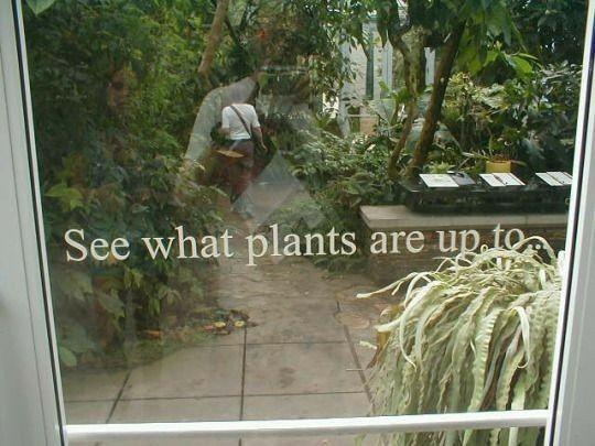 Vanhanajan Huonekasvit