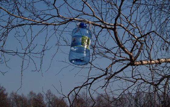 Birch water health benefits