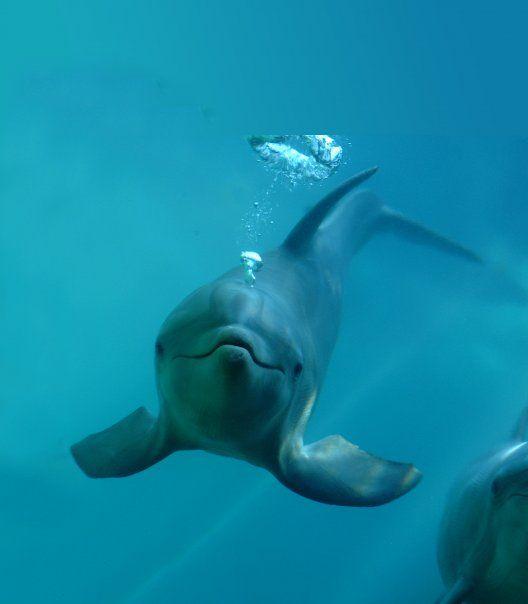 We Love Dolphins Delfines Animales De Oceano Animales Bonitos