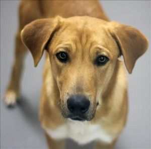 Harper, at the SPCA of Texas in Dallas dallas mckinney