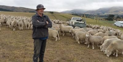 Farmers desperate for rain. With no grass, Dunback farmer Ken Fergusson is feeding barley to his ewes. Photo: Stephen Jaquiery