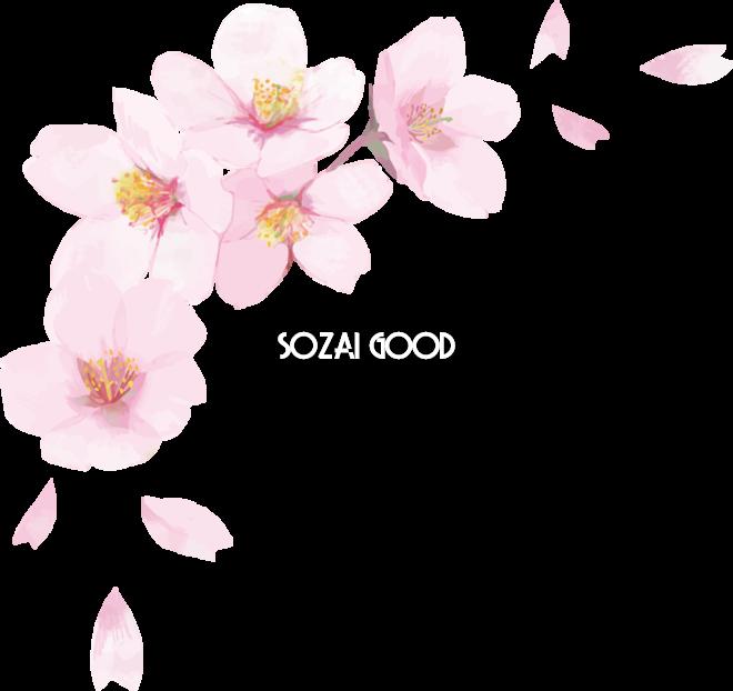 リアル綺麗な桜花びらイラスト 右上角用飾り背景なし透過無料フリー