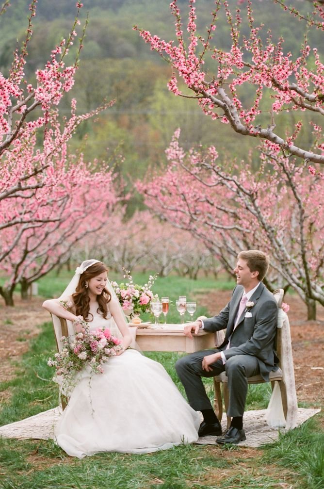 Virginia Orchard Bridal Inspiration From Jen Fariello Photography Cherry Blossom Wedding Cherry Blossom Wedding Theme Cherry Blossom Wedding Inspiration