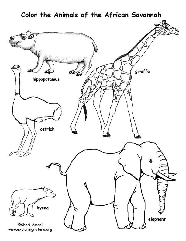 Savanna African Animals Coloring Page African Savanna Animals Savanna Animals Animal Coloring Pages