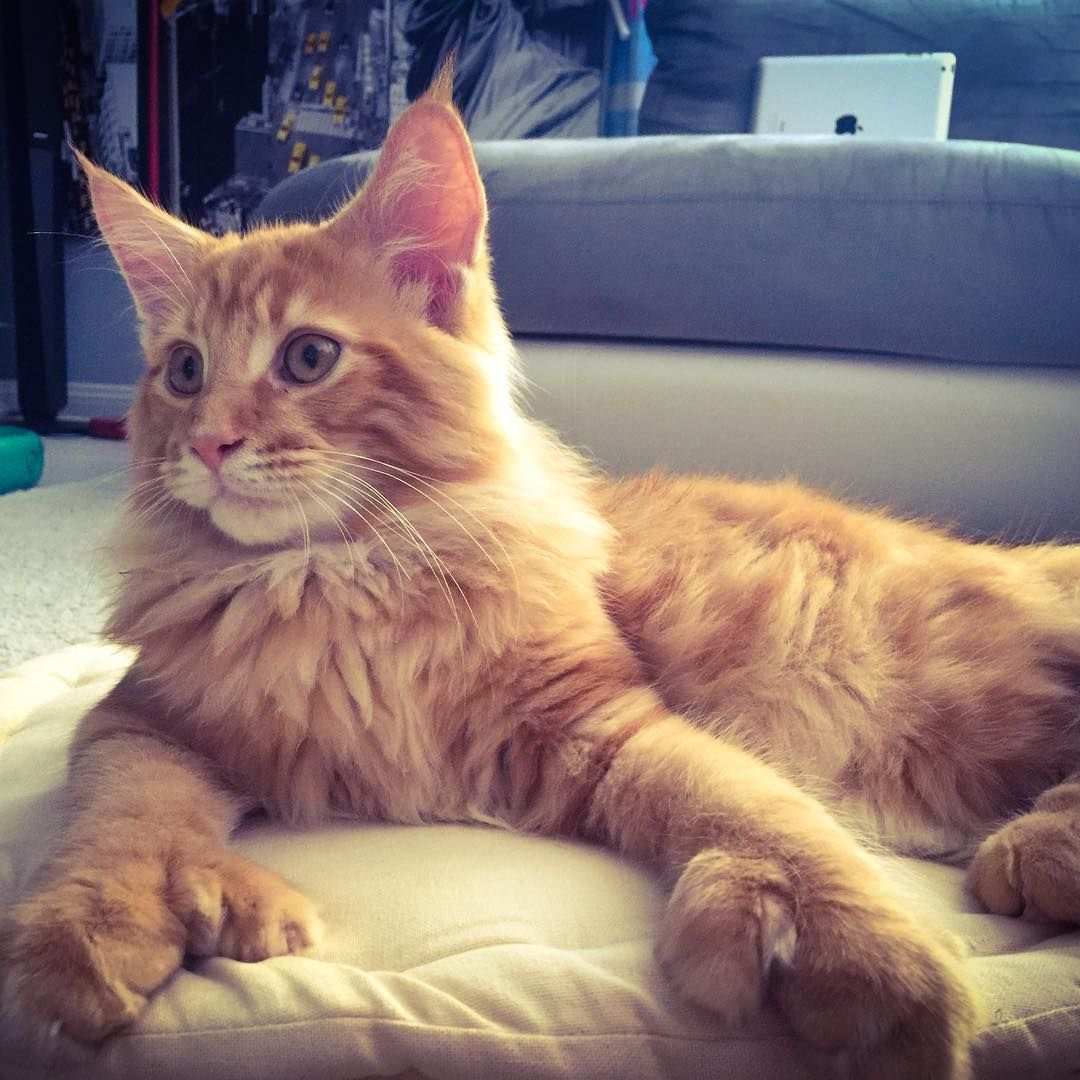 15 Clever Names For Polydactyl Cats | Orange cats | Cats ...  15 Clever Names...