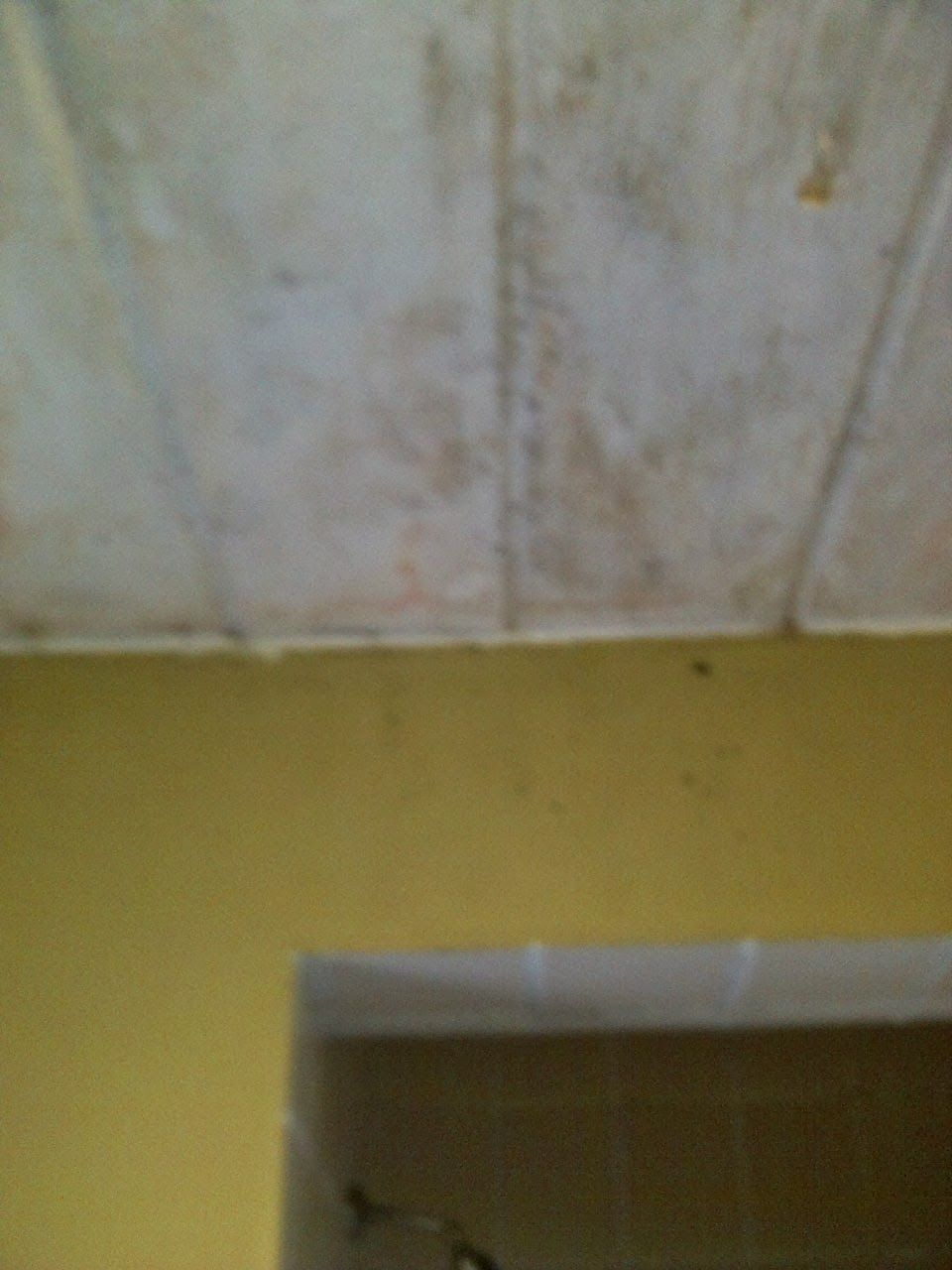 Bathroom Bathroom Shower How Does Mould Grow What Is Mould Effects Of Mould Mould Bathroom Mould Mildew Mold In Bathroom Bathroom Ceiling Mildew Remover