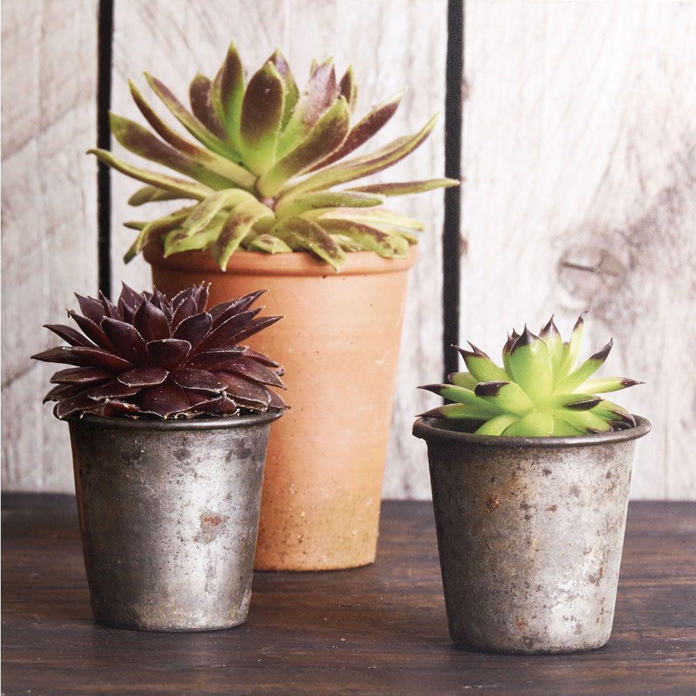 Wilko Succulent Cactus Canvas 48 x 48cm | Art | Pinterest