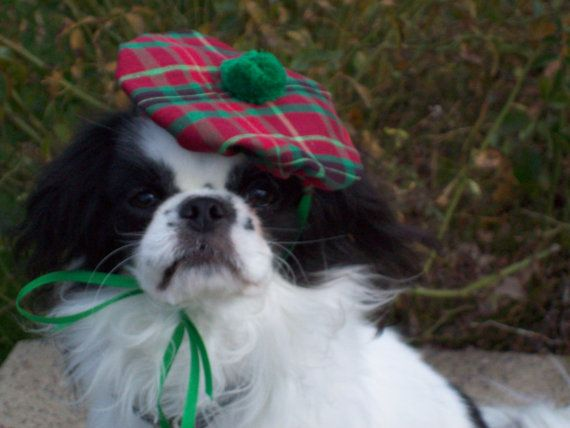 Red and Green Plaid Scottish Tam Small Dog Christmas by Doginafez, $7.50