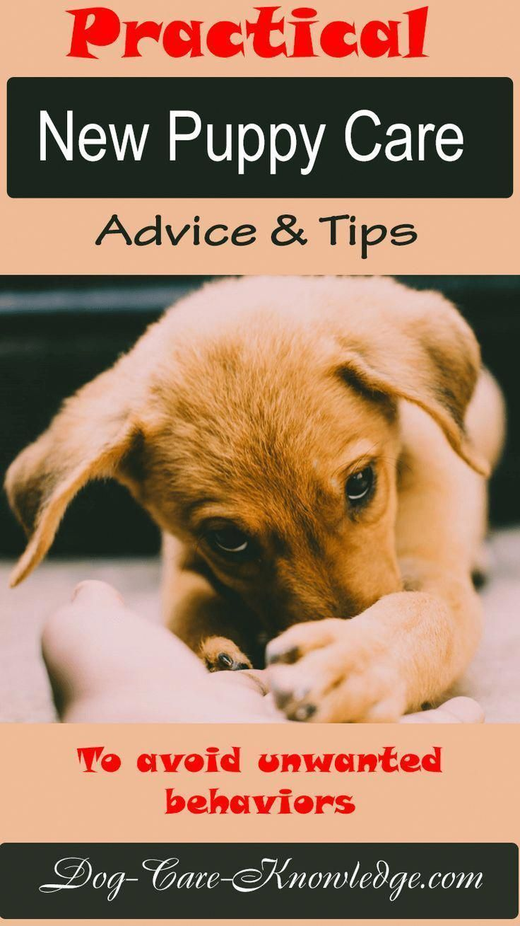 New puppy care tips and advice for dog owners that want to