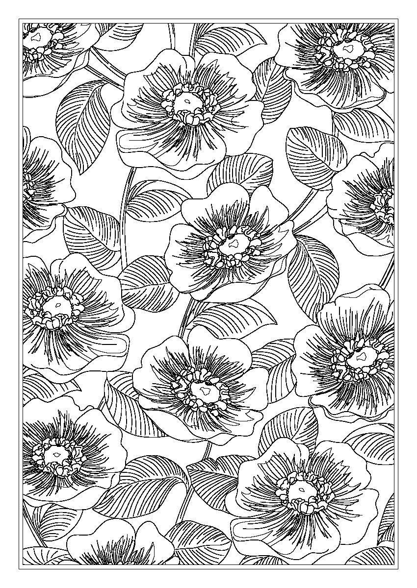 Amazon Com Vera Bradley Color Bold Coloring Book Vera Bradley Coloring Collection 9781497202962 Vera Bradley Books Authentic Design Book Set Color