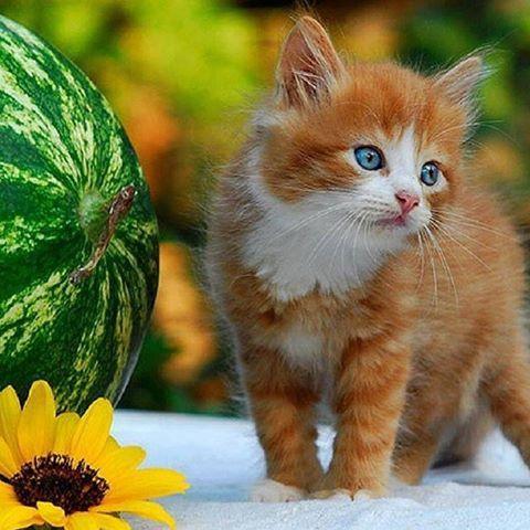 قطه قطط كيوت جميله Photo Instagram Animals