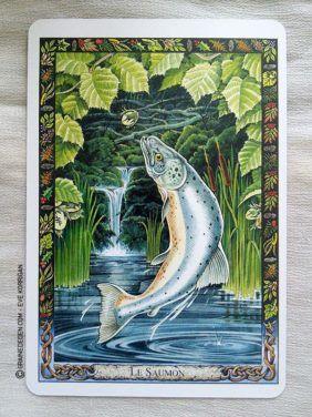 L Oracle Des Druides De Philip Et Stephanie Carr Gomm Tarot Animales Tarot Divinatoire