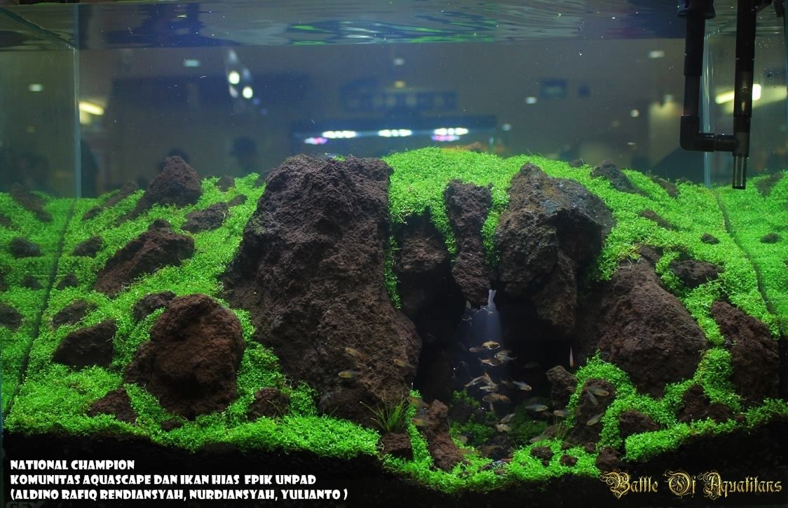 Cave Under Rocks Substrate Super Cool Aquascape Planted