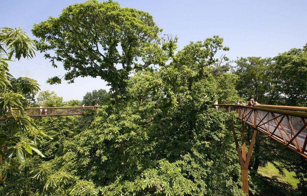 603f7e305723ede0116815c8890dd20e - How High Is The Tree Top Walk At Kew Gardens