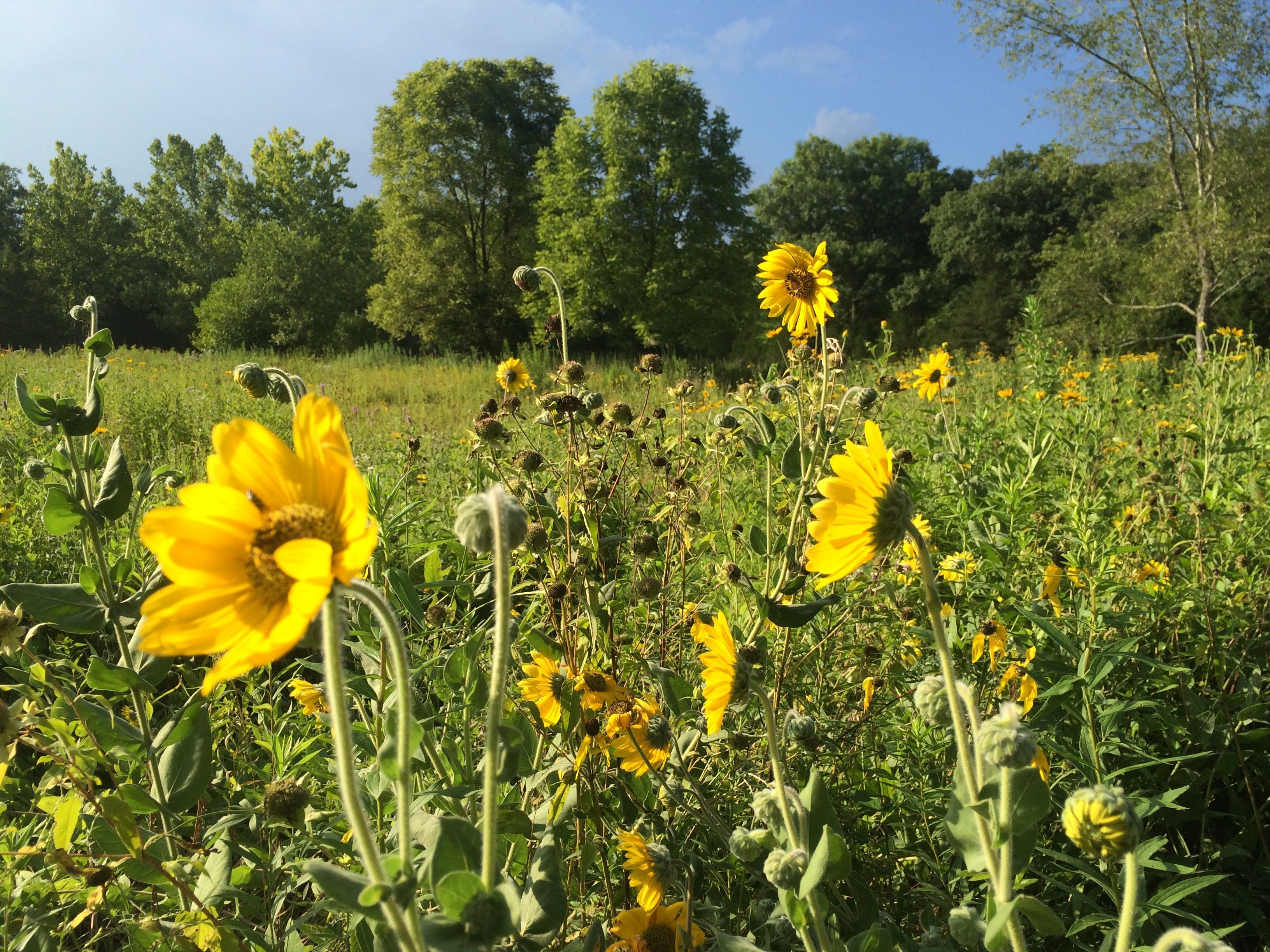 Mandalas In the Prairie. http://goo.gl/4x4Cuj - We walked the prairie, found inspiration & created mandalas