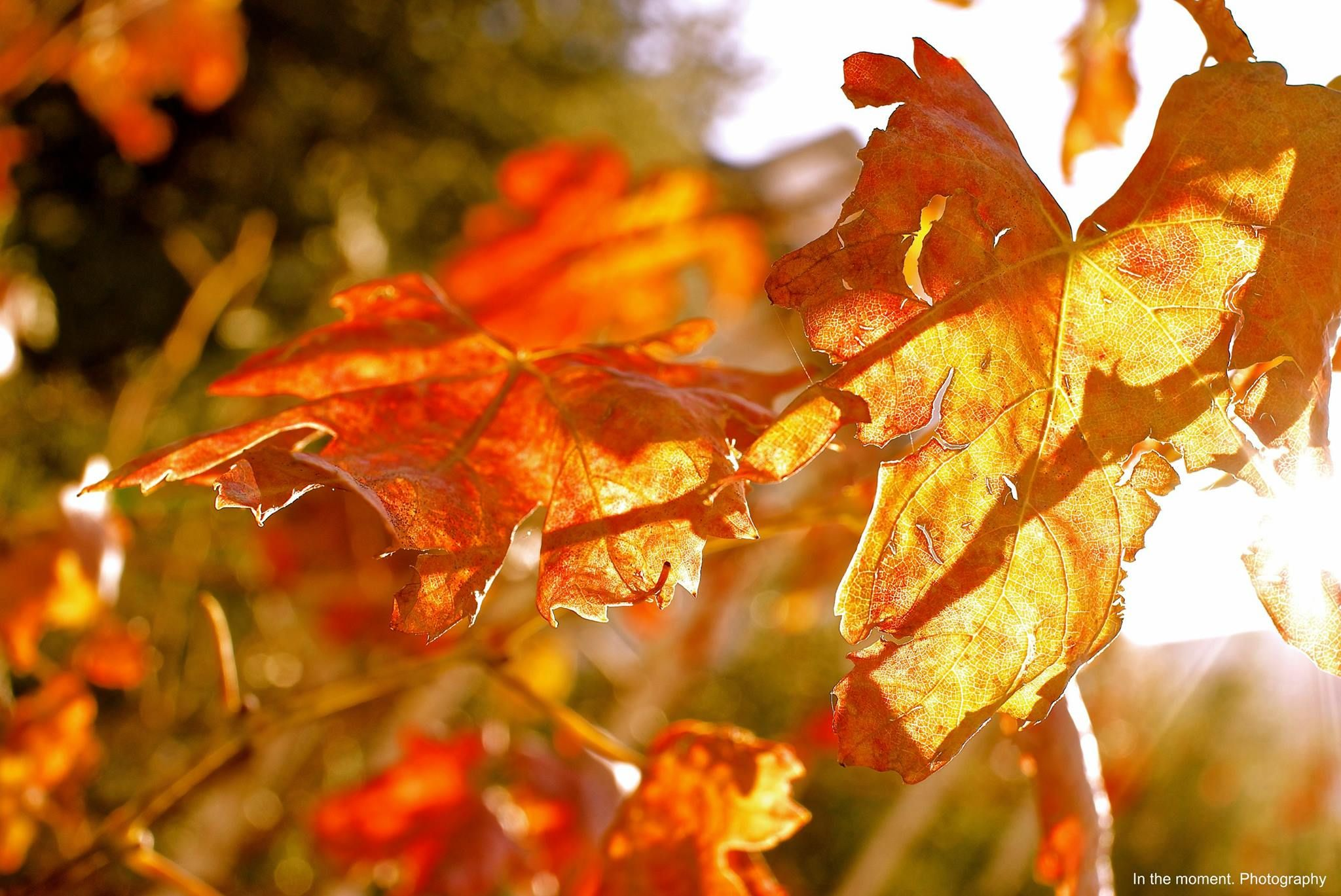 Autumn Leaves by: In the moment. Photography