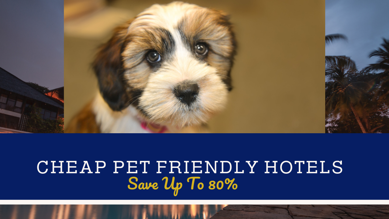 Cheap Pet Friendly Hotels Near Me Install App Now Pet Friendly Hotels We Offer A Wide Range Of Accommoda Pet Friendly Hotels Cheap Pets Outdoor Play Areas