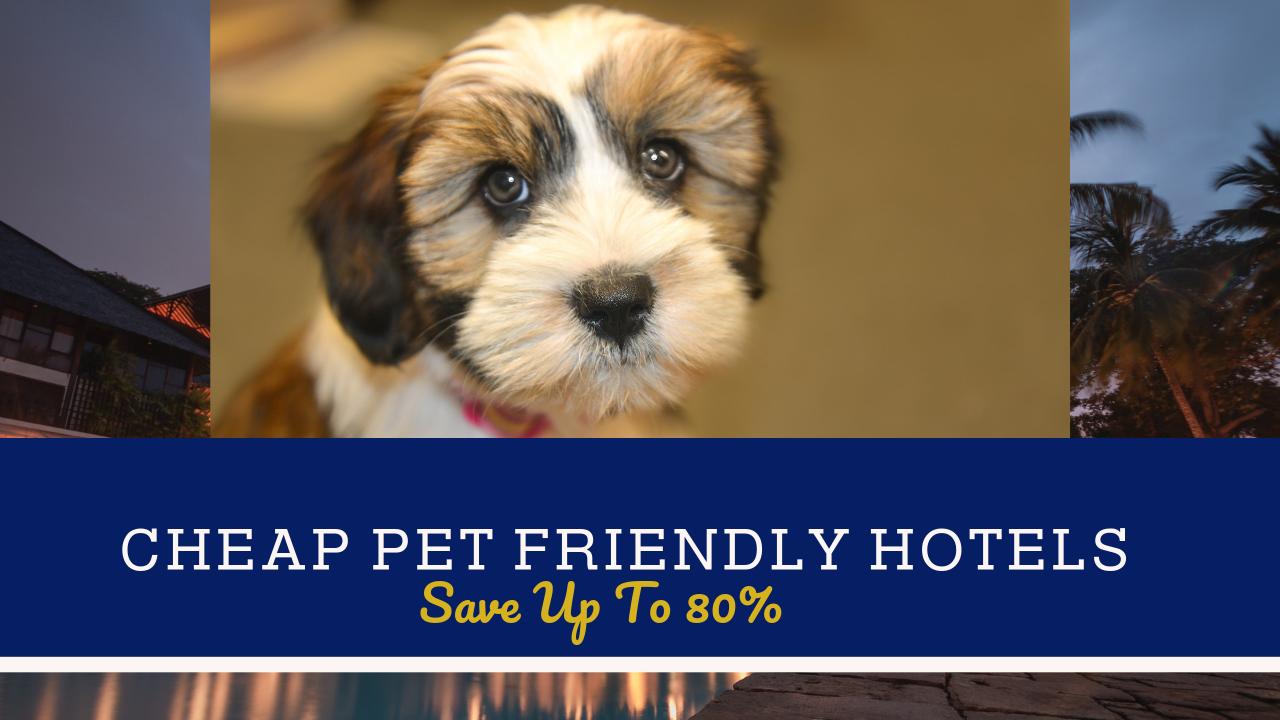 Cheap Pet Friendly Hotels Near Me Install App Now Pet