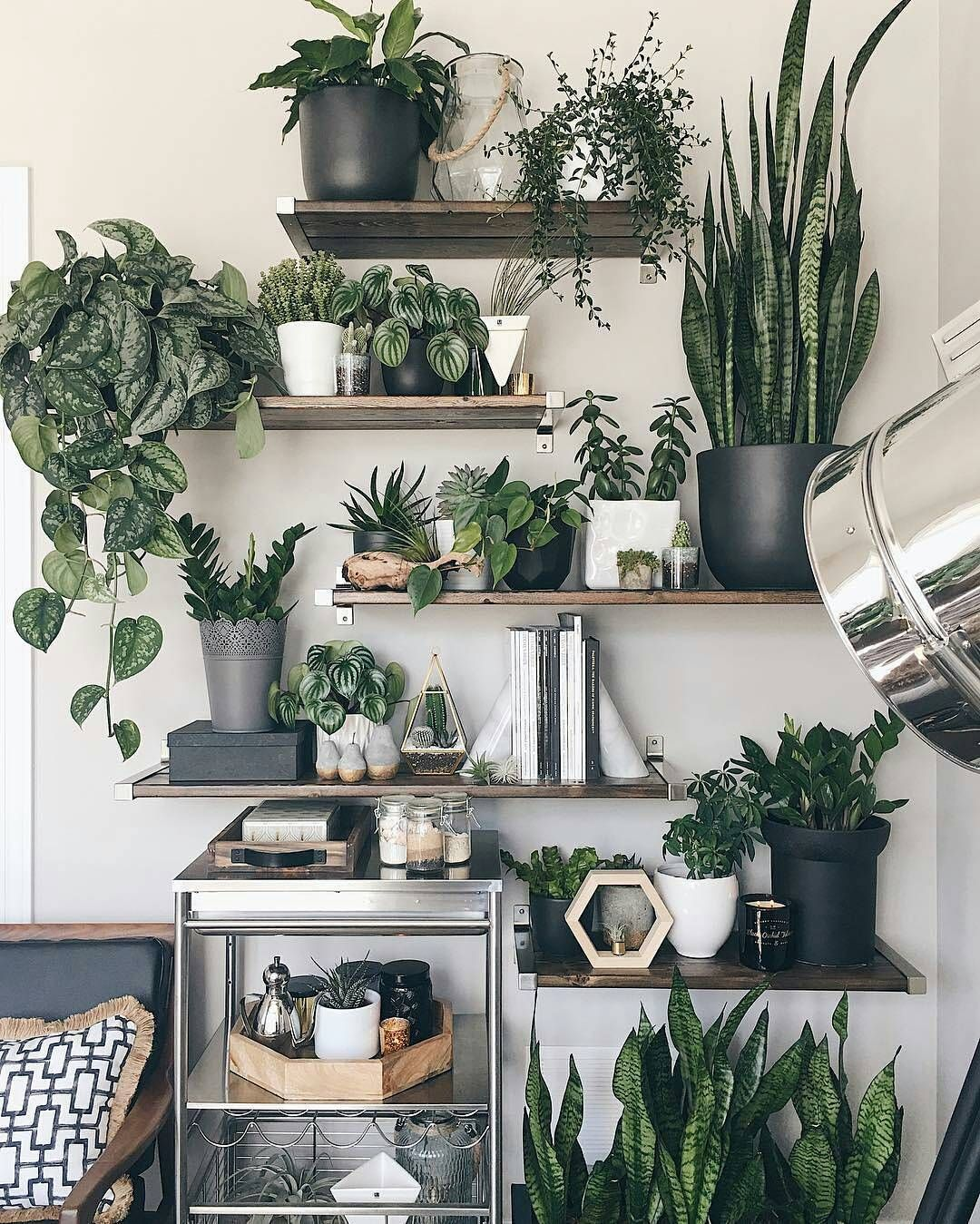 Plant Shelving Indoor Pin By Sasha Zuwolinsky On Decor Room With Plants
