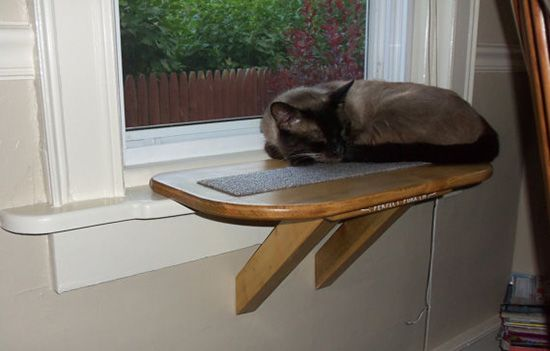 Perfect Perch Cat Window Seat Cat Window Perch Cat Window Cat