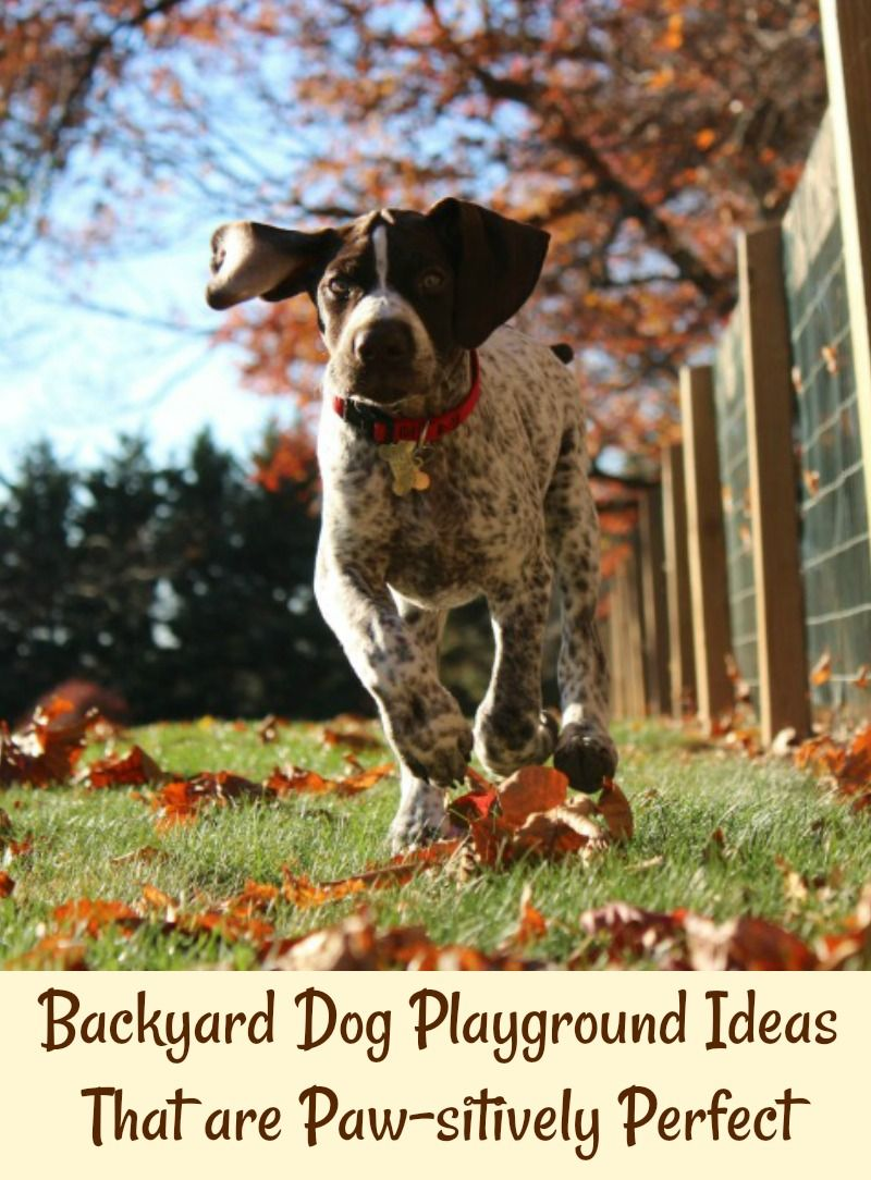 Backyard Dog Playground Ideas That are Pawsitively