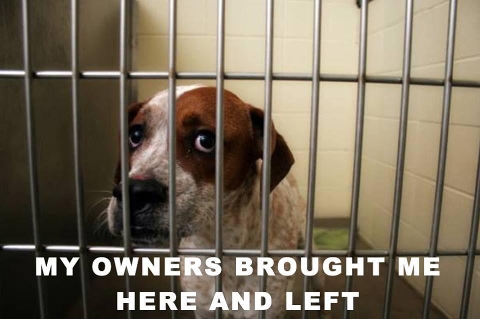 No one gets left behind animal shelter shelter dogs