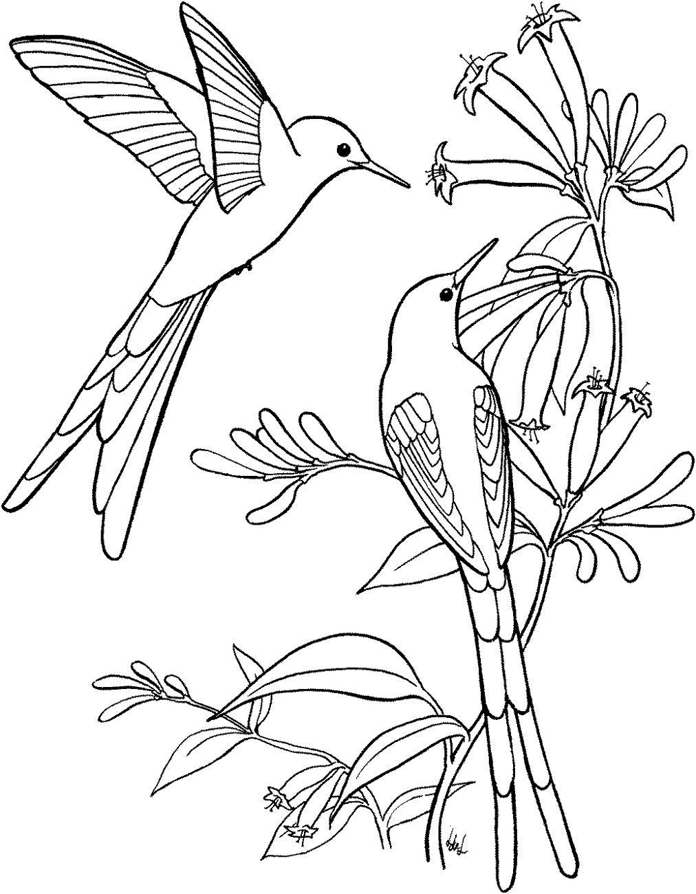 magnolia-and-bird-coloring-page.gif (1013×1188) | embroidery ...