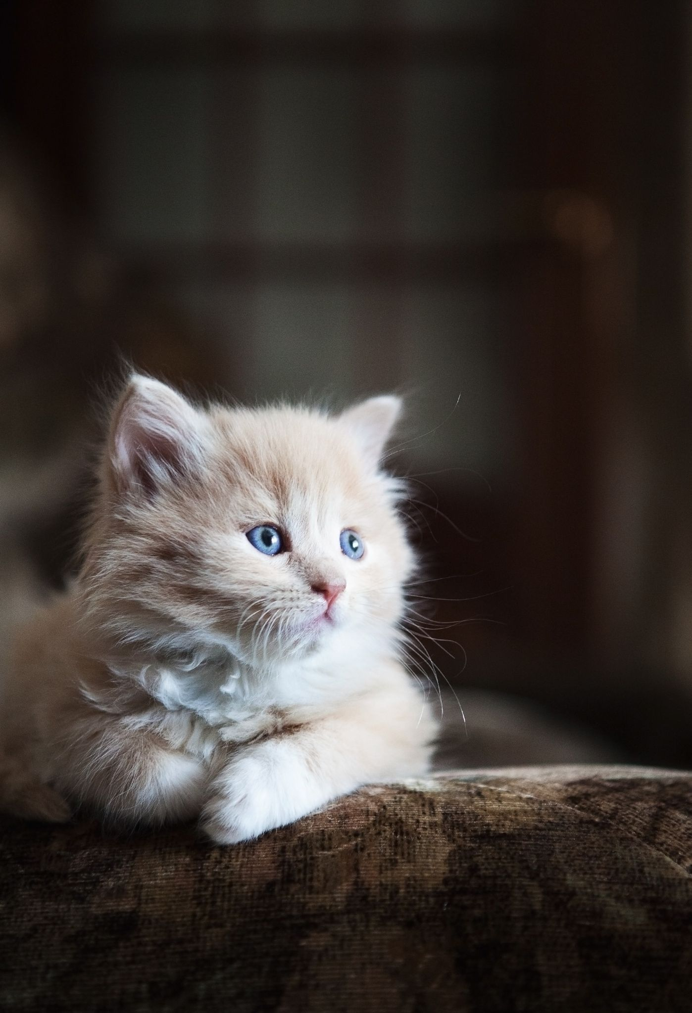 Cat by Yriy Mikheev on 500px Cats, Cute cats, Cute small