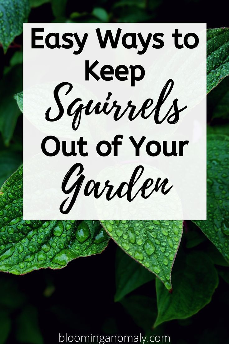Easy ways to keep squirrels out of your garden blooming