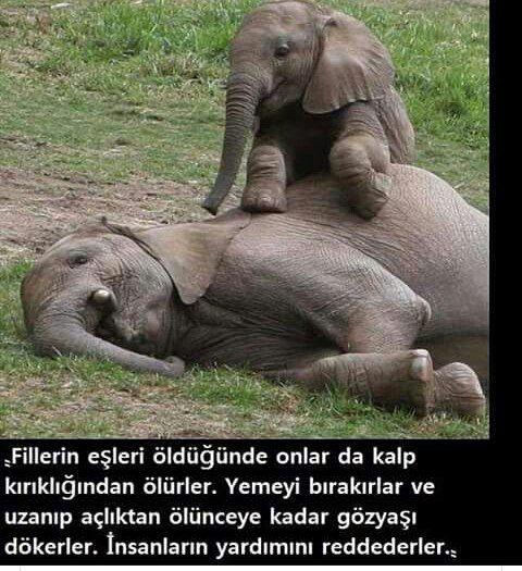 #SubhanAllah Filler kadar olamadık