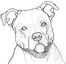 Image Result For Pitbull Clipart Cartoon Birds Dog Drawing